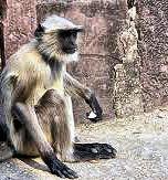 monkey-solo.jpeg